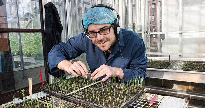 John Innes Centre scientist working with plants in a greenhouse.