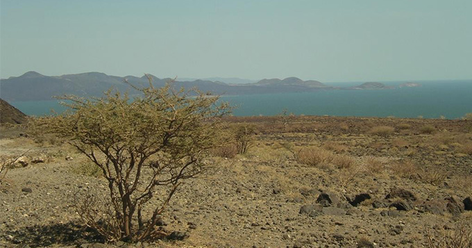 Lake Turkana with gnarled tree in foreground