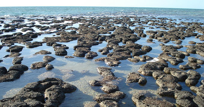 3. Stromatolites at Shark Bay in Western Australia