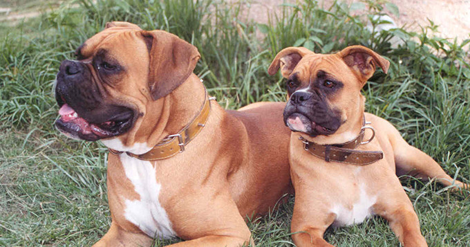 Photo of two dogs sitting on grass