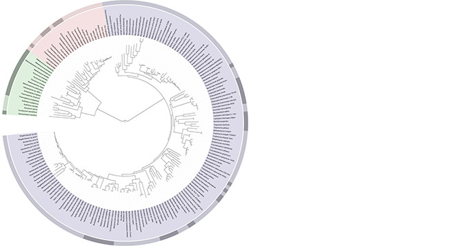 A highly resolved Tree Of Life, based on completely sequenced genomes, generated using iTOL: Interactive Tree Of Life, an online phylogenetic tree viewer and Tree Of Life resource. Author: Ivica Letunic.